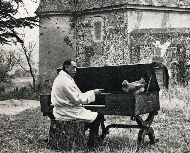 Goutelas Duke poule 1966